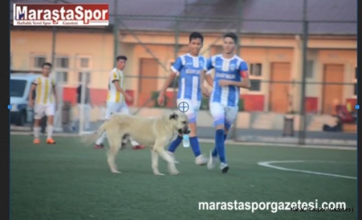 Kahramanmaraş'ta oynanan maçta sahaya köpek girdi